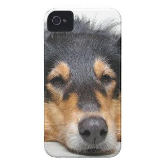 Rough collie dog nose blackberry bold case