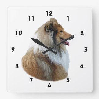 Rough Collie dog portrait photo Square Wall Clocks