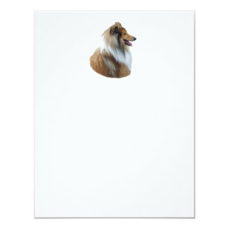 Rough Collie dog portrait photo 4.25x5.5 Paper Invitation Card