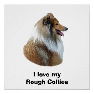 Rough Collie dog portrait photo Poster