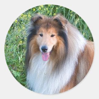 Rough Collie dog portrait stickers, present idea