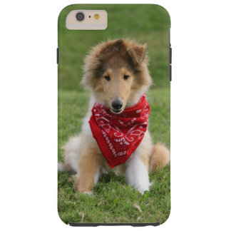 Rough Collie dog puppy lovers photo iphone 6 case