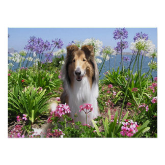 Rough Collie in Flowers Poster