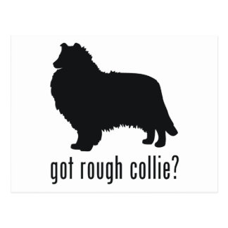 Rough Collie Postcard