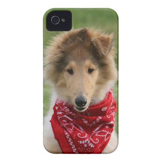 Rough collie puppy dog cute beautiful photo iPhone 4 Case-Mate case