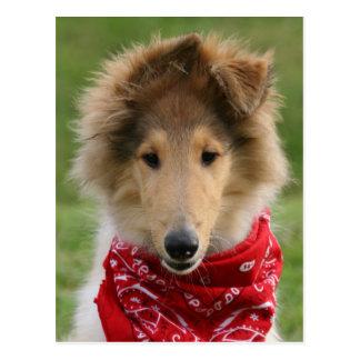 Rough collie puppy dog cute beautiful photo postcard