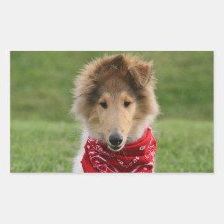 Rough collie puppy dog cute beautiful photo rectangular sticker