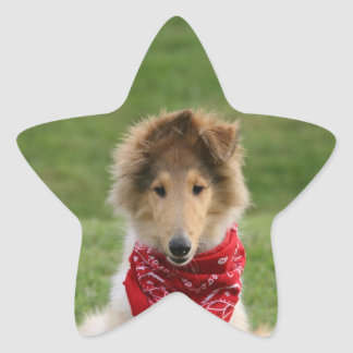 Rough collie puppy dog cute beautiful photo star sticker