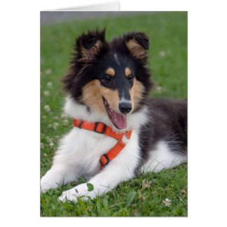 Rough collie puppy dog cute blank note card