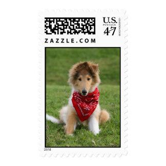 Rough collie puppy dog cute photo postage stamp