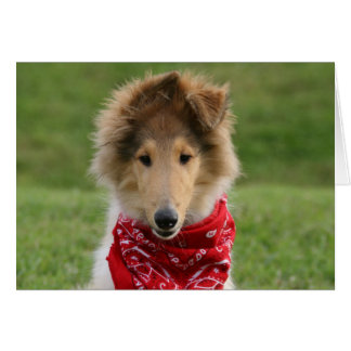 Rough collie puppy dog photo blank greetings card
