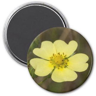 Rough-fruited Cinquefoil Yellow Wildflower Magnet