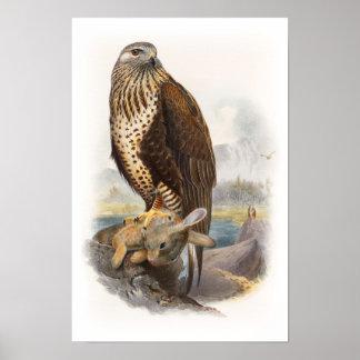 Rough-legged Buzzard Gould Birds of Great Britain Poster