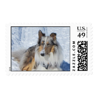 Rough Merle Collie postage stamp