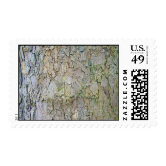 Rough Old Tree Bark Texture Background Postage