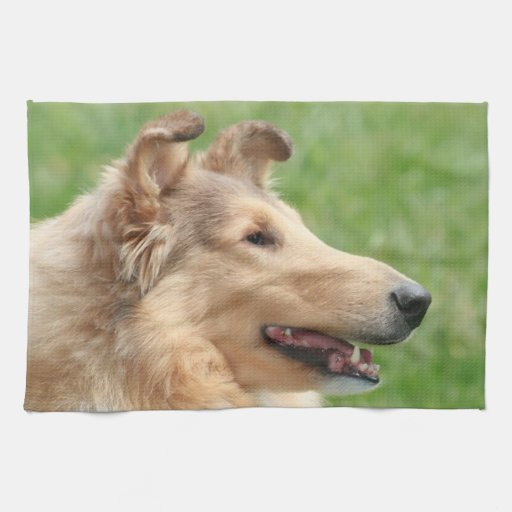 Rough Sable Collie Hand Towels