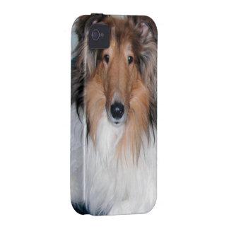 Rough Sable Collie iPhone 4 Case