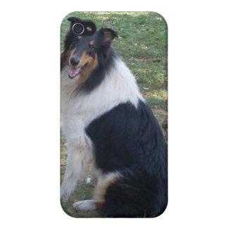 Rough Tri Collie iPhone 4 case