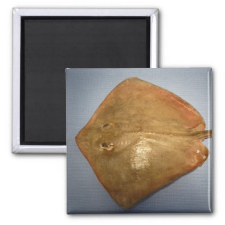 Roughtail Stingray 2 Inch Square Magnet