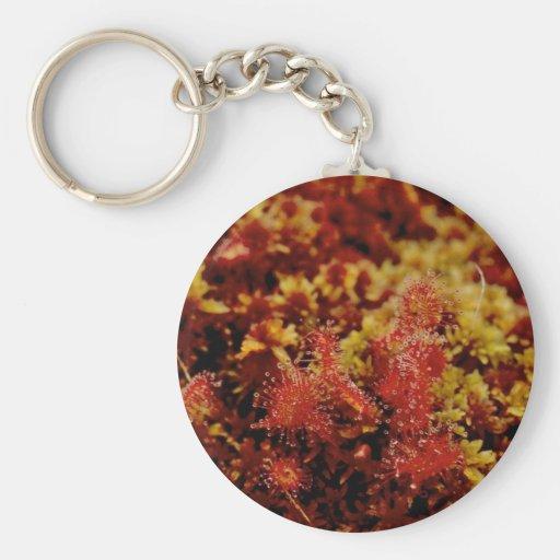 Round Leaf Sundew Keychain