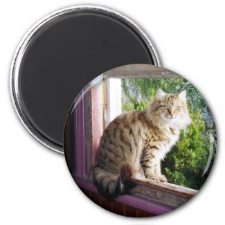 Round Magnet - Shirl in Window