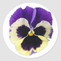 Round Purple and Yellow Pansy Stickers