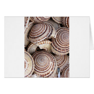 Round Sea Shells Card