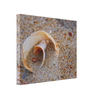 Round Seashell on Canvas Canvas Prints