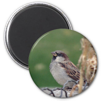 Round Sparrow Magnet