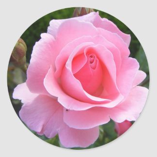 Round sticker with beautiful pink rose