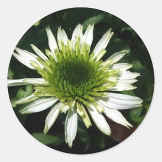 Round Stickers - White Coneflower