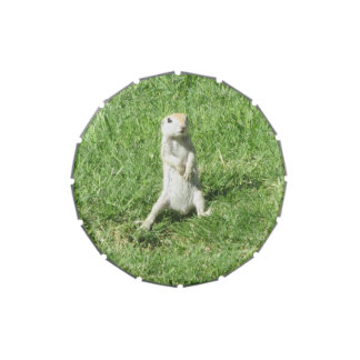 Round-tailed Ground Squirrel Jelly Belly Tin