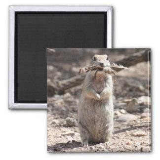 Round-tailed Ground Squirrel Fridge Magnets
