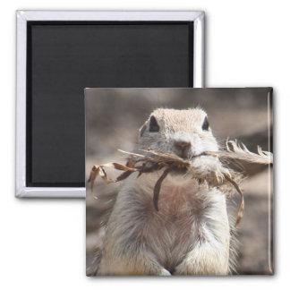 Round-tailed Ground Squirrel Refrigerator Magnets