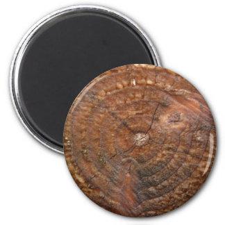 round tree ring magnet. magnet