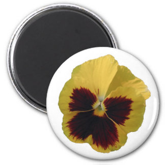 Round Yellow Pansy Magnet