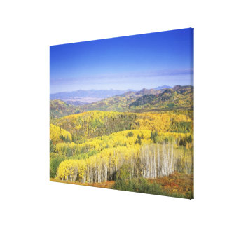 Routt National Forest in Autumn color, near Canvas Print