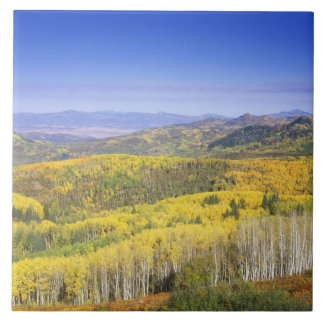 Routt National Forest in Autumn color, near Ceramic Tile