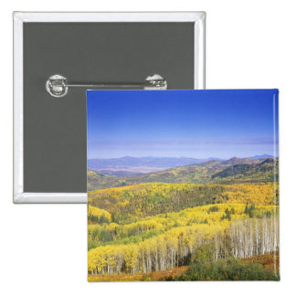 Routt National Forest in Autumn color, near Pinback Button
