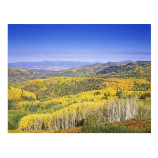 Routt National Forest in Autumn color, near Postcard