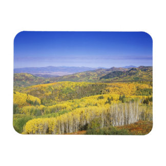 Routt National Forest in Autumn color, near Rectangular Magnets