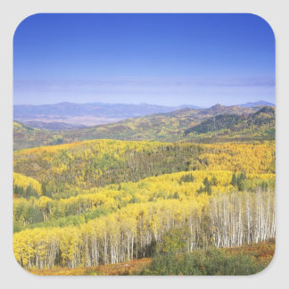 Routt National Forest in Autumn color, near Square Sticker
