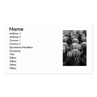 Row Of Cactuses Business Card