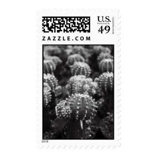 Row Of Cactuses Postage