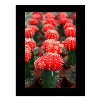 Row Of Cactuses Postcard