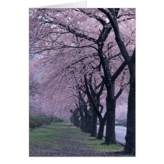 Row of cherryblossom trees greeting card