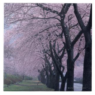 Row of cherryblossom trees ceramic tile
