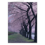 Row of cherryblossom trees greeting card