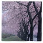 Row of cherryblossom trees large square tile