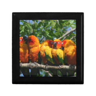 Row of Cute Little Parrots Snuggling Gift Box